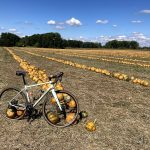gravel bike on pumpking field