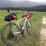specialized sequoia at alpine pasture in the julian alps